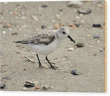Sanderling Wood Print by Al Powell Photography USA