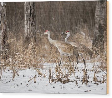 Sandhill Crane 2016-4 Wood Print by Thomas Young