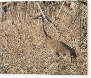 Sandhill Crane 2016-7 Wood Print by Thomas Young