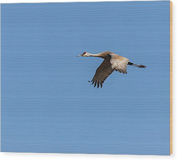 Sandhill Crane 2017-1 Wood Print by Thomas Young