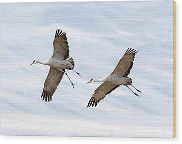 Sandhill Crane Approach Wood Print by Mike Dawson