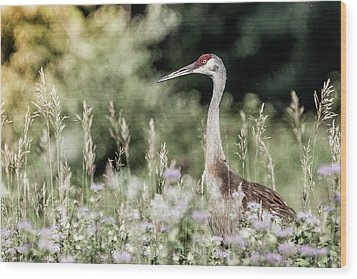 Sandhill Crane Wood Print by Cathy Cooley