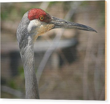 Sandhill Crane Closeup Wood Print by Brian M Lumley