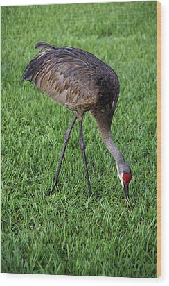 Wood Print featuring the photograph Sandhill Crane II by Richard Rizzo
