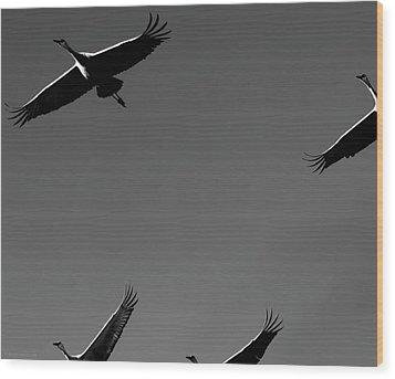 Wood Print featuring the photograph Sandhill Crane In Flight by Britt Runyon