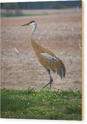 Wood Print featuring the photograph Sandhill Crane In Profile by Bill Pevlor