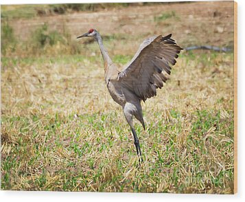 Wood Print featuring the photograph Sandhill Crane Morning Stretch by Ricky L Jones