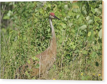 Sandhill Crane Wood Print by Ron Read