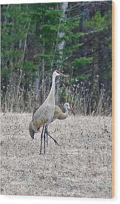Wood Print featuring the photograph Sandhill Cranes 1166 by Michael Peychich