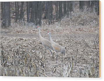 Wood Print featuring the photograph Sandhill Cranes 1171 by Michael Peychich