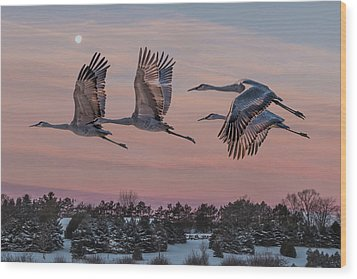 Sandhill Cranes In Flight Wood Print by Patti Deters