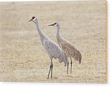 Wood Print featuring the photograph Sandhill Cranes Of Montana by Jennie Marie Schell