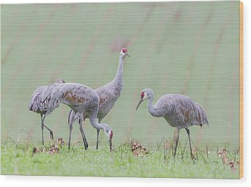 Wood Print featuring the photograph Sandhill Cranes Of Ridgefield by Angie Vogel