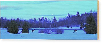 Wood Print featuring the photograph Sandhill Cranes Reflecting In The Moonlight by Randy Rosenberger