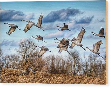 Sandhill Cranes Wood Print by Sumoflam Photography