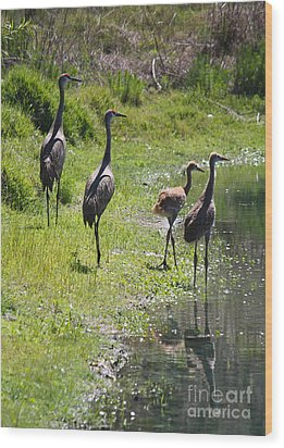 Sandhill Family By The Pond Wood Print by Carol Groenen