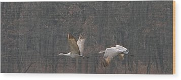 Wood Print featuring the photograph Sandhills In Flight by Shari Jardina
