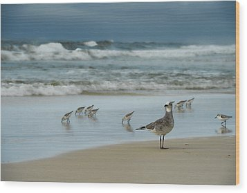 Sandpiper Beach Wood Print