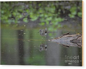 Wood Print featuring the photograph Sandpiper In The Smokies by Douglas Stucky