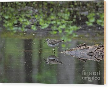 Wood Print featuring the photograph Sandpiper In The Smokies II by Douglas Stucky