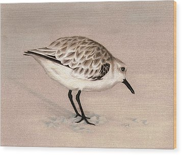 Sandpiper On Sand Wood Print by Heather Mitchell
