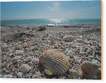 Sanibel Island Sea Shell Fort Myers Florida Wood Print