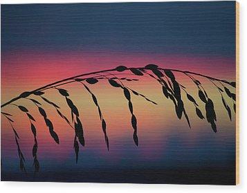 Wood Print featuring the photograph Sanibel Sea Oats by Melanie Moraga