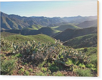 Wood Print featuring the photograph Santa Monica Mountains - Hills And Cactus by Matt Harang