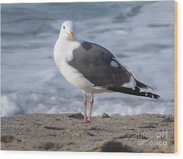 Santa Monica Seagull Wood Print by Margaret Brooks