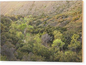 Wood Print featuring the photograph Santa Ysabel Creek At Boden Canyon by Alexander Kunz