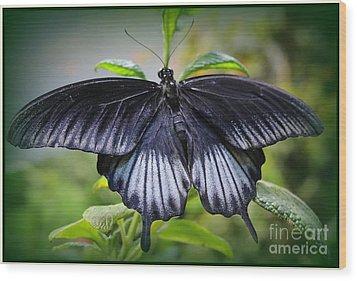 Sapphire Blue Swallowtail Butterfly Wood Print