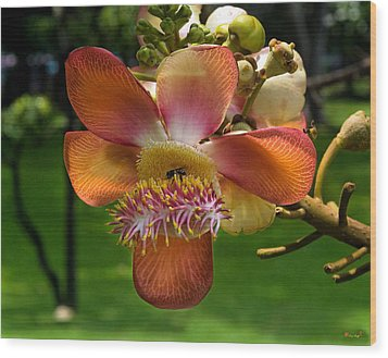 Sara Tree Flower Dthb104 Wood Print