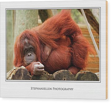 Sassy Orangutan Wood Print