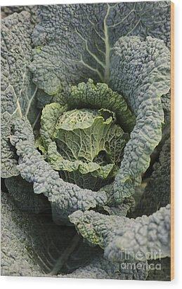 Savoy Cabbage In The Vegetable Garden Wood Print by Carol Groenen