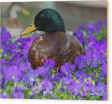 Say Quack Wood Print