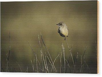 Say's Flycatcher Wood Print