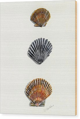 Scallop Shell Trio Wood Print by Sheryl Heatherly Hawkins
