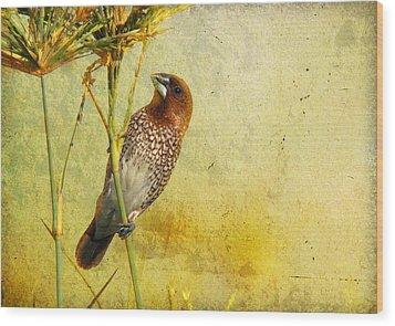 Scaly-breasted Munia Wood Print by Perry Van Munster