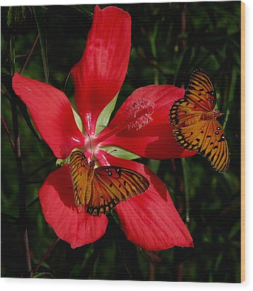 Wood Print featuring the photograph Scarlet Beauty by Peg Urban