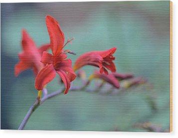 Scarlet Blooms Wood Print