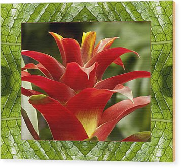 Wood Print featuring the photograph Scarlet Cheer by Bell And Todd