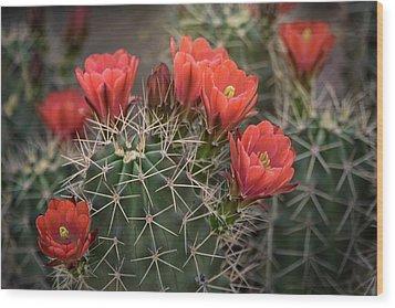Wood Print featuring the photograph Scarlet Hedgehog Cactus  by Saija Lehtonen