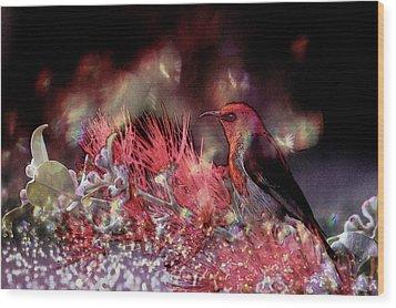 Scarlet Honeyeater Wood Print by Ericamaxine Price