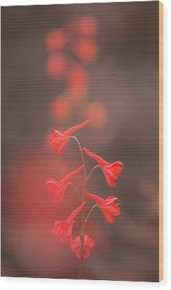 Wood Print featuring the photograph Scarlet Larkspur Clouds by Alexander Kunz