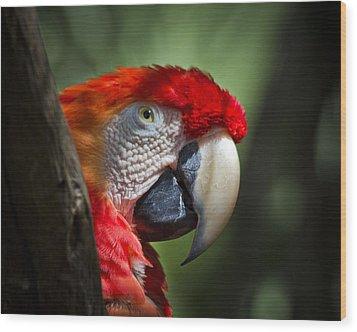 Scarlet Macaw Wood Print by Roger Wedegis