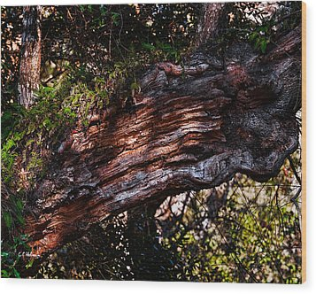 Scarred Wood Print by Christopher Holmes