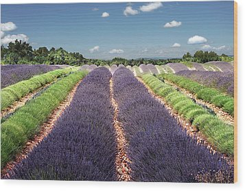 Scent Of Lavender Of Provence Wood Print by Any.colour.you.like Photography