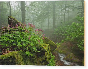 Scent Of Spring Wood Print by Evgeni Dinev
