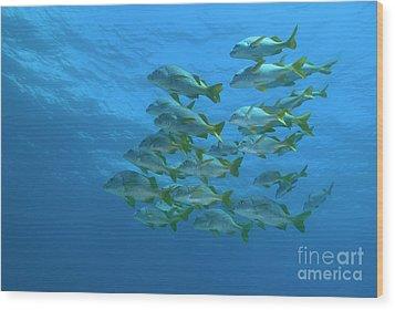 School Of Yellowtail Grunt Underwater Wood Print by Sami Sarkis