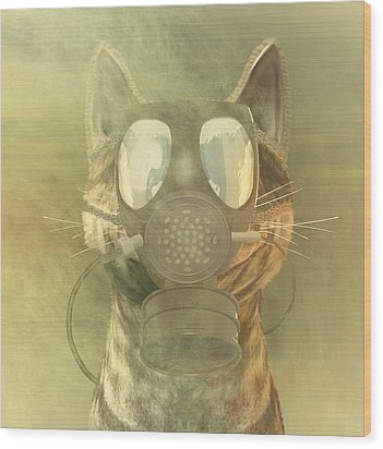Schrodinger Underestimates The Cat. Wood Print by Carol and Mike Werner